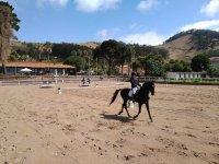 Equitacion profesional en Tenerife