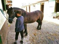 Preparacion del caballo en Tenerife