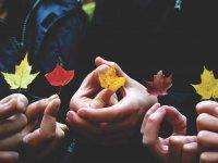 Cogiendo hojas de los arboles