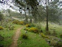 Paseos y pinares