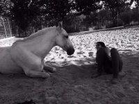 Tumbada frente al caballo