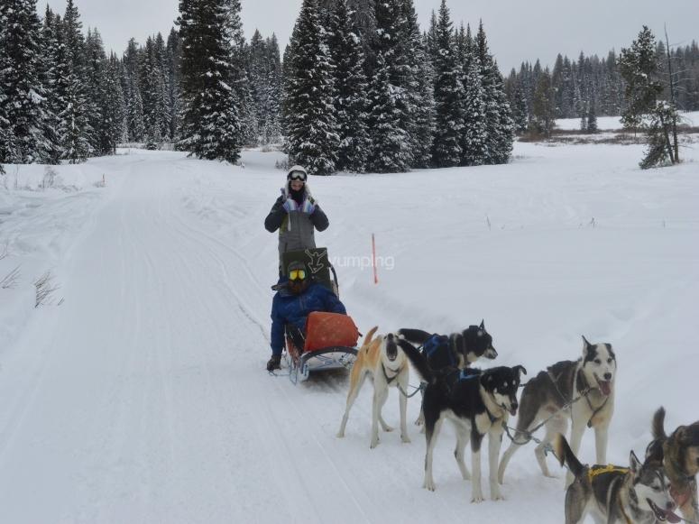 Sledding with dogs Pla de Beret