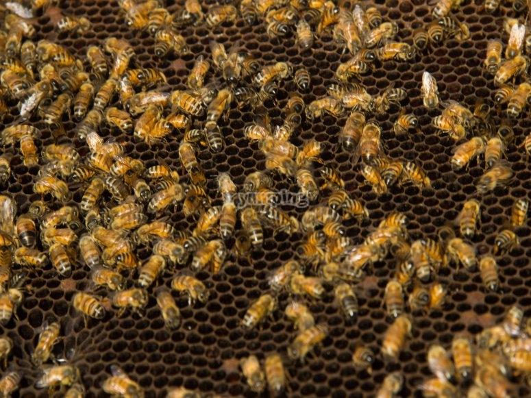 Bee's colony