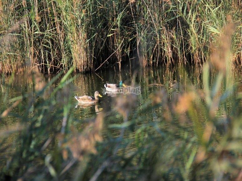 Wetlands of the Gaia River