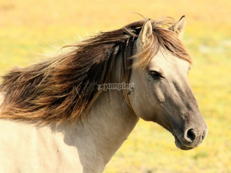 Nuestro caballo