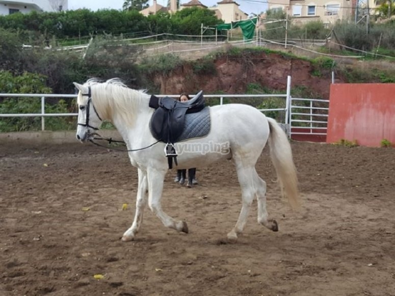 骑马学校的马