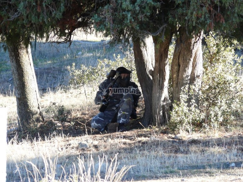 躲在树后面