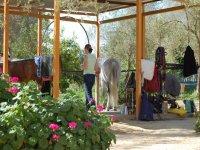 preparing the horse