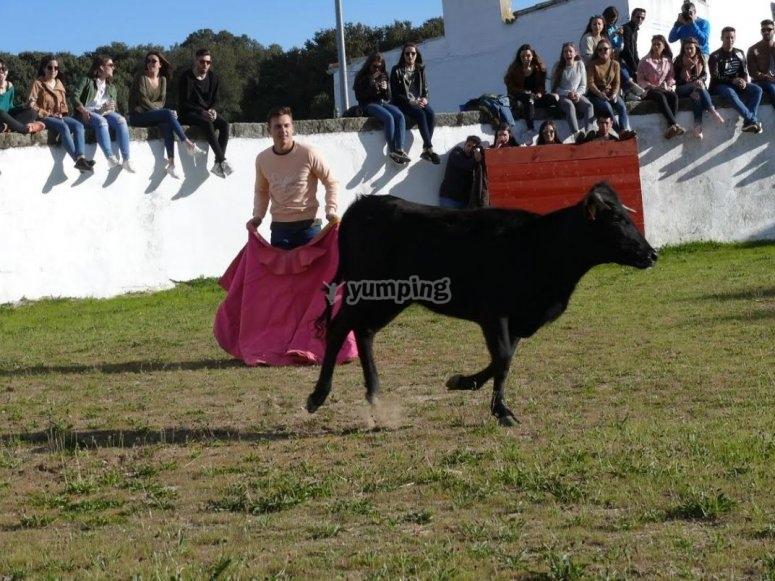 Chico con capote y vaquilla