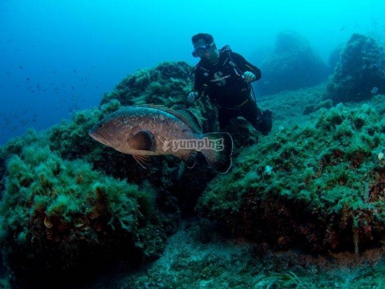 来马洛卡潜水吧
