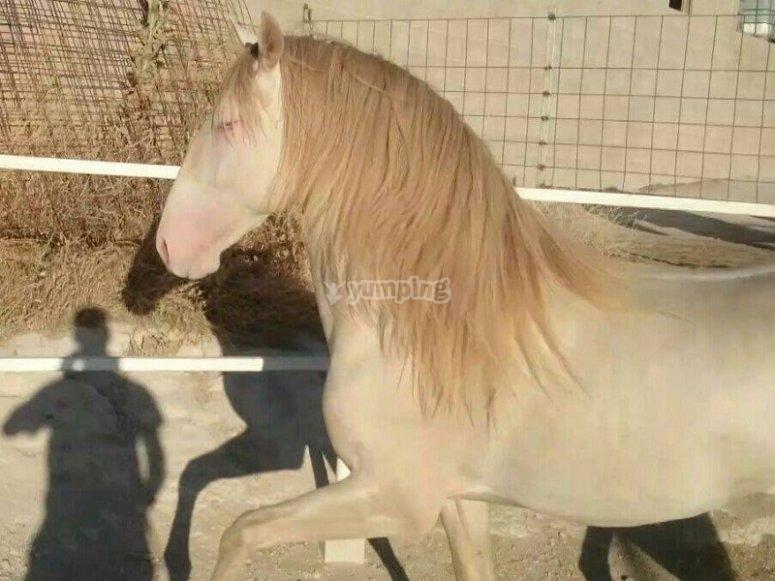 雄伟的马匹标本