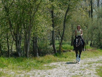 Beginner Horseriding in Villacarriedo 1 Hour