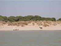 Ciervo en la playa