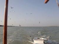 Gaviotas alzando el vuelo