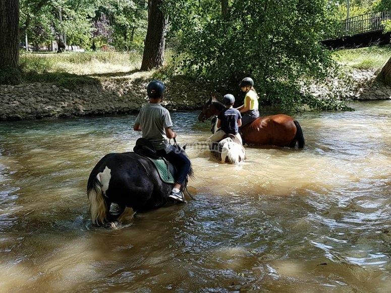 Caballos cruzando por el agua