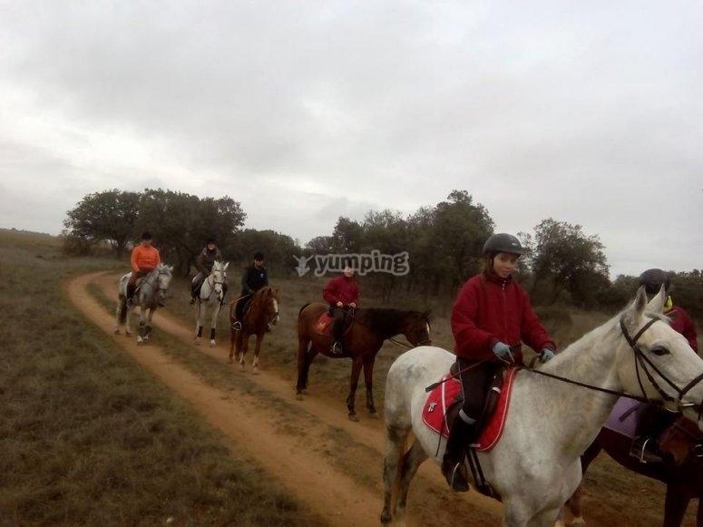 Hilera de caballos