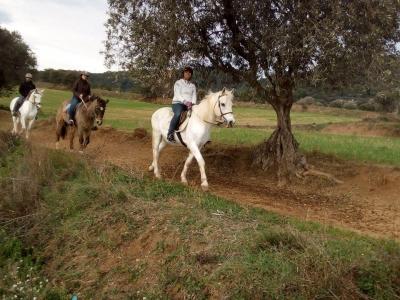 Ruta a caballo privada VIP en el Montseny 1 hora