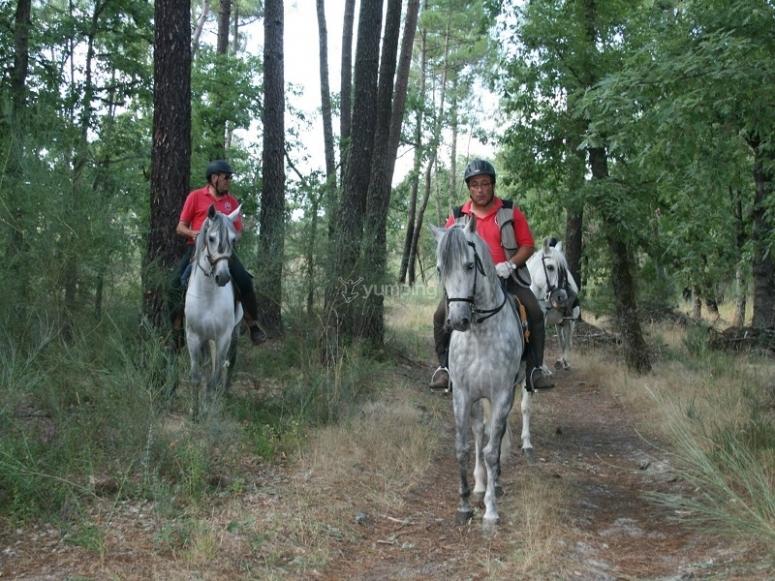 在马背上穿过树林