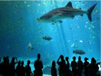 The Aquarium of Barcelona