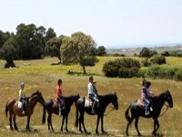 On the horses