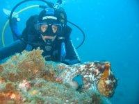Observando la fauna submarina