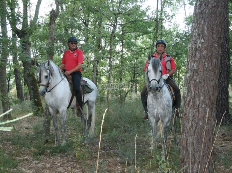 By horse among the trees