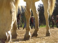 courses and workshops. Self-knowledge through yoga and horses