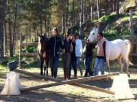 coaching course with horses