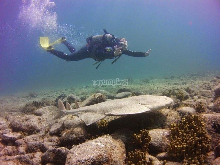 探索海洋动物