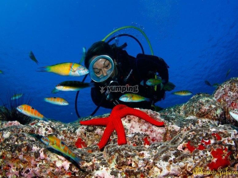 与海星一起潜水