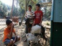 随着elburrito动物农场