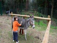 享受游乐设施去梳理驴