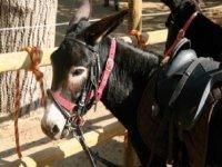 美丽驴完美的环境与我们的驴路线