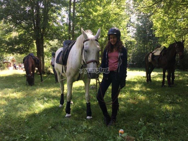 Descanso con los caballos en el bosque
