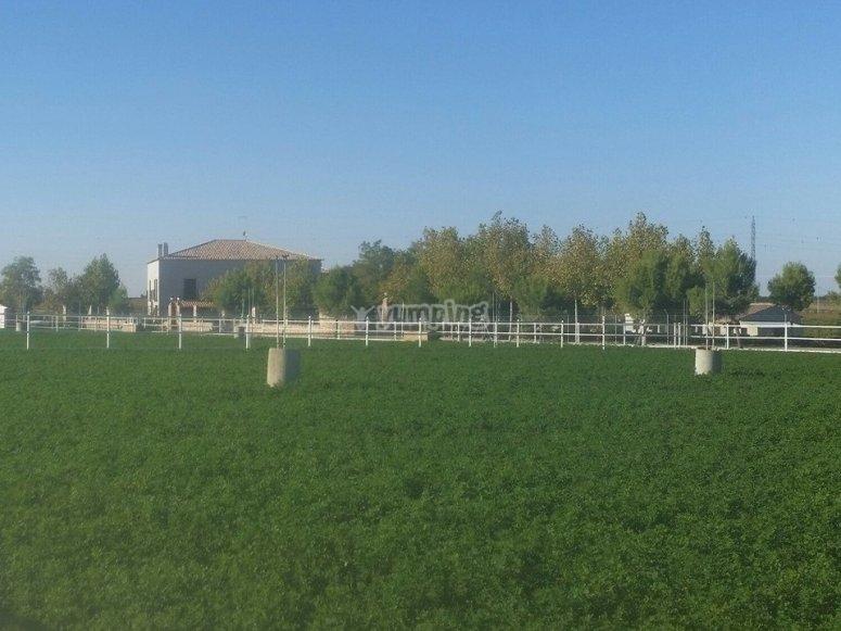 Capea外饰农场在Villarrobledo芬卡为capeas