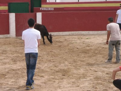 Villarrobledo的Capea有2头小母牛和啤酒