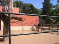 Instalaciones para cebras