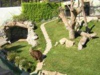 Nuevas instalaciones para osos