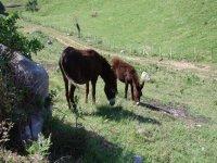dos burros comiendo hierba