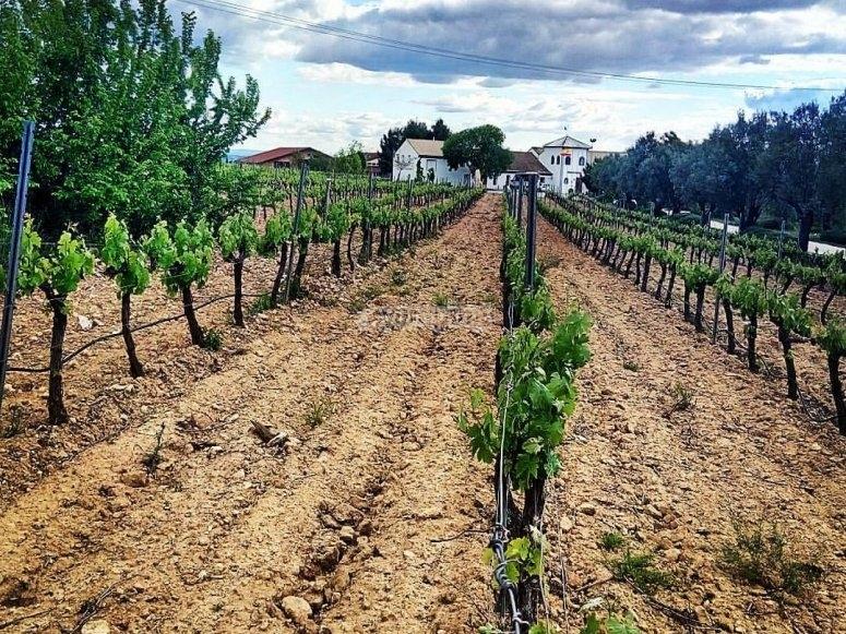 与葡萄酒世界相遇