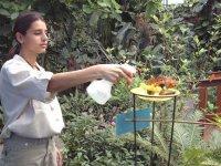 Alimentando a las mariposas