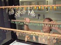 Muestrario de mariposas