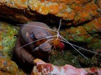 curso fotografia subacuatica