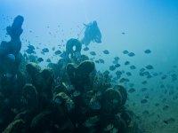 Inmersión en los Biotopos