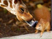 Convivencia entre animales