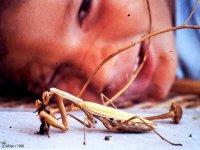 Observando a la mantis religiosa