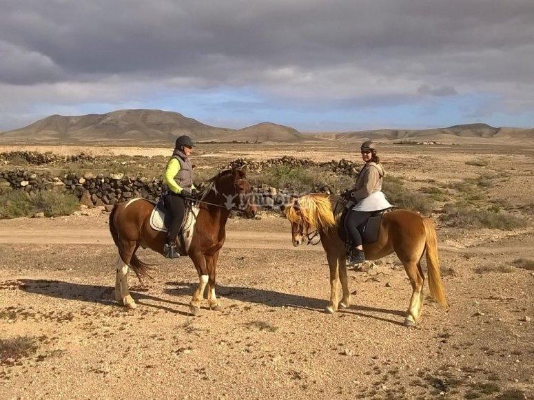 Caballos en un camino de Fuerteventura