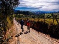 Penedés葡萄园之间的自行车路线