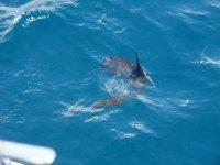 Sighting of cetaceans