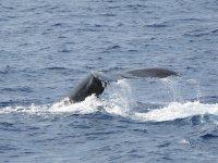 Cetaceans on the coast